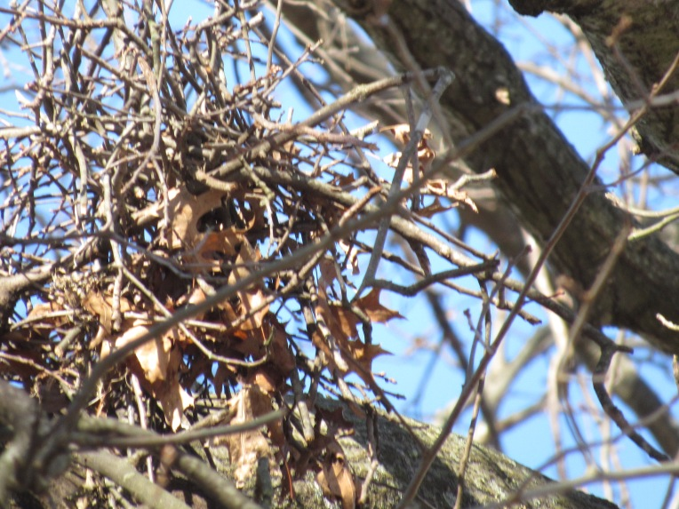 Broken Up Hawk Nest