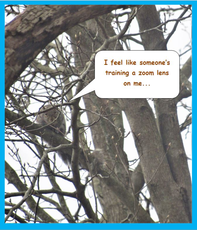 Squirrel Zoom