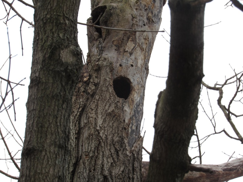 Photo of hole in tree trunk