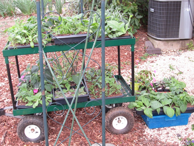 Photo of garden cart and plants