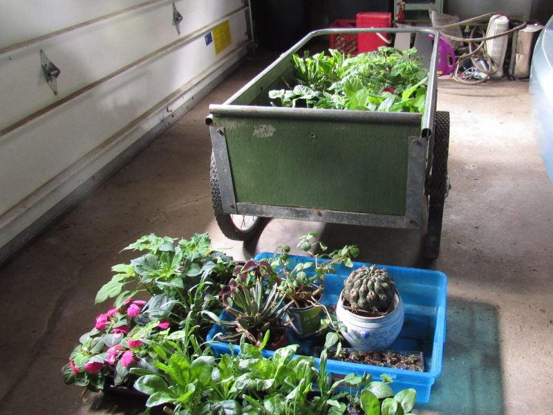 Photo of plants in garage