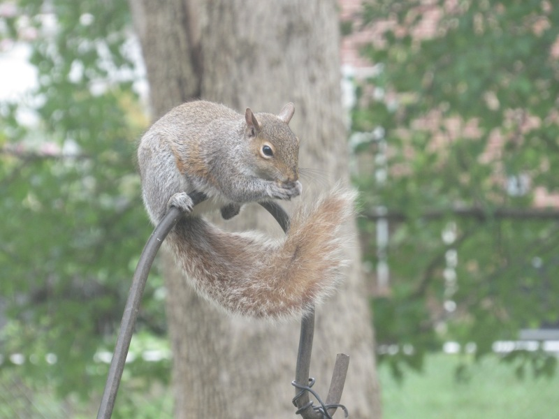 Photo of squirrel on feeder pole