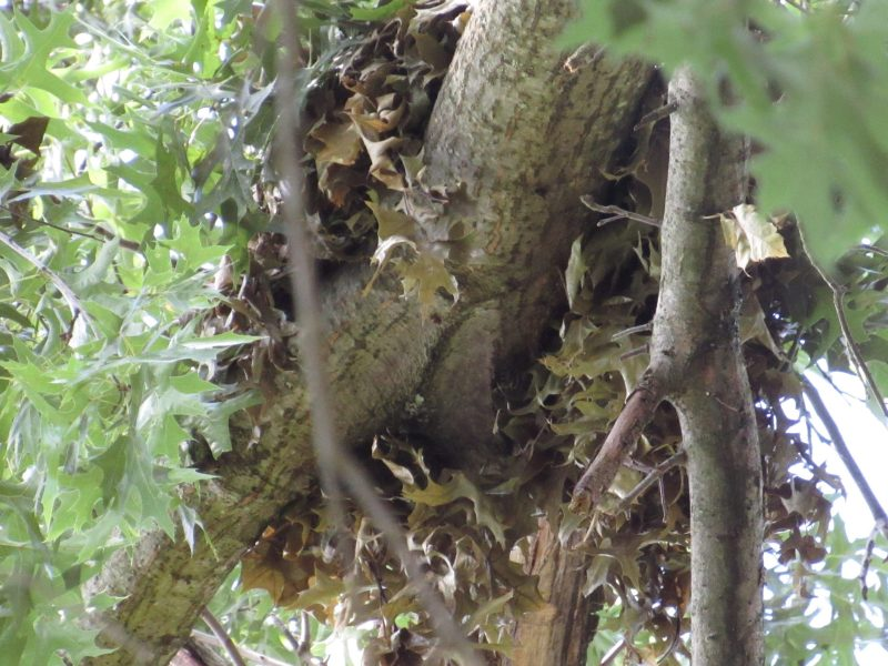 Photo close-up of squirrel nest