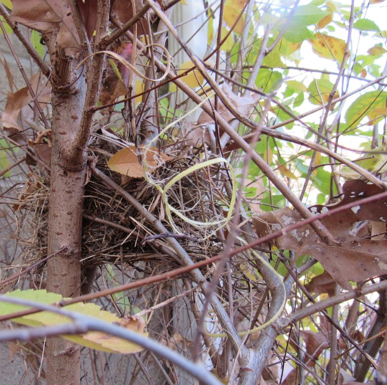 Photo of small bird's nest