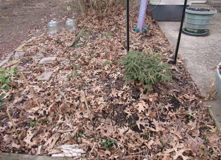 Photo of raked-off flower bed